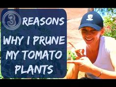 http://www.veseys.com In this video, Vesey's horticulturist describes the difference between determinate and indeterminate tomatoes as well as the best techn...