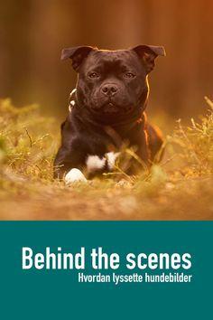 Se hvordan jeg jobber med blits utendørs når jeg fotograferer hunder.   Min første Live stream hvor jeg viser hvordan jeg jobber med lys for å ta bedre bilder av hund ute. Presentasjon av Godox AD200 og Magmod sitt blits tilbehør. Blandt annet MagBox. Live Stream, Streamers, Behind The Scenes, Dogs, Animals, Animales, Animaux, Paper Streamers, Pet Dogs