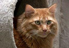 A Beautiful Golden Cat