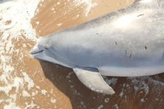 Officials asking for public assistance in dolphin shooting investigation