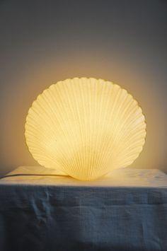 lampe andre Cazenave coquillage shell