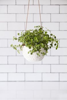 Textured white planter with a green plant on a white subway tiled background