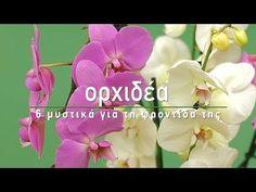 Πότε χρειάζεται μεταφύτευση, πώς γίνεται το κλάδεμα, κάθε πότε χρειάζεται πότισμα και λίπανση η ορχιδέα για να μας χαρίσει πλούσια ανθοφορία. Some Ideas, Orchids, Home And Garden, Landscape, Rose, Flowers, Plants, Gardening, Brunch Recipes