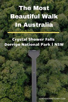 10 reasons to do the Crystal Shower Falls Walk in Dorrigo National Park – mariasimons. Visit Australia, Australia Travel, Western Australia, South Australia, Australia Hotels, Australian Road Trip, Australian Beach, Australian Holidays, Places To Travel