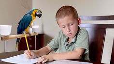 WASHINGTON—A study released Tuesday by the U.S. Census Bureau revealed that over 10 million American children are now being raised in single-parrot households, up almost 50 percent from a decade ago.