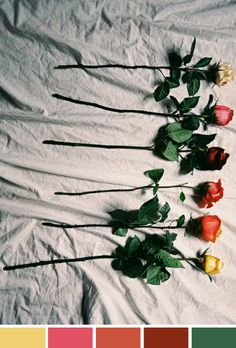 Achados da Bia | Inspiração do Dia | Arranjo de Flores | Rosas coloridas