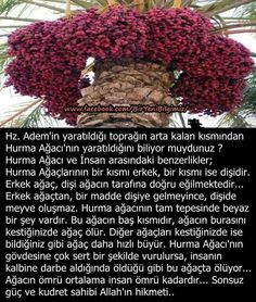 Neşe'nin gözdeleri Best Love Messages, Best Caps, Allah Islam, Interesting Information, Natural Health Remedies, Sufi, Wonderful Things, Cool Words, Did You Know