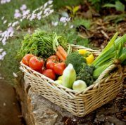 Kochkurs für Sportler - gesunder Genuss - Your body is your temple! - Figur bewusst, vegean und vegetarisch