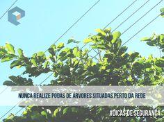 #DicasDeSegurança para podas de árvores