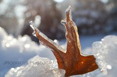 Leaf in Ice with Crystal Reflections II by RodgersDigitalDesign, $10.00