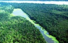 Pregopontocom Tudo: Amazônia em PERIGO