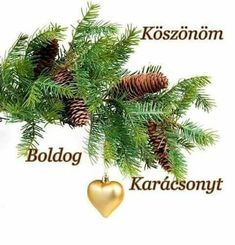 Xmas, Winter, Advent, Plants, Winter Time, Christmas, Navidad, Noel, Plant