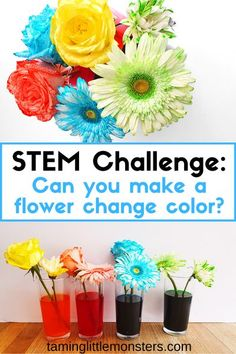 Can you make a flower change color? That's the aim of this STEM experiment for kids. Learn how to use capillary action to make flowers change color with this Spring time homeschool activity. #STEM #science #Spring #preschooler #homeschool #kindergarten