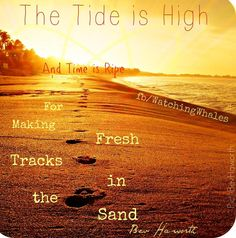 Time is right for fresh tracks in the sand quote via www.Facebook.com/WatchingWhales