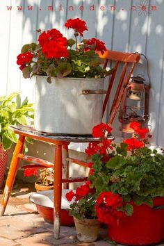 House plants geraniums in pots front porches ivy geraniums bouture geranium essie geranium g Red Cottage, Garden Cottage, Farm Cottage, Cozy Cottage, Cottage Style, Farm House, Red Geraniums, Potted Geraniums, Geranium Planters