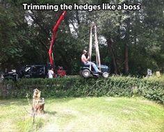 Trim bush