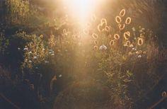 Shooting Film: Summer Flowers