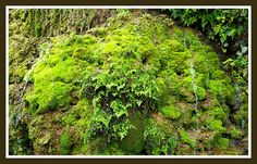 THE ETERNAL FALLS OF A HUNDRED RIVLETS THAT NEVER TOUCH THE VIBRANT MOSSES OVER WHICH THEY RUN