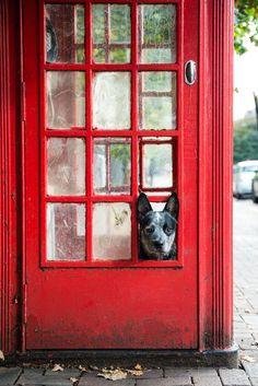 A Dog's Life In London | Bored Panda