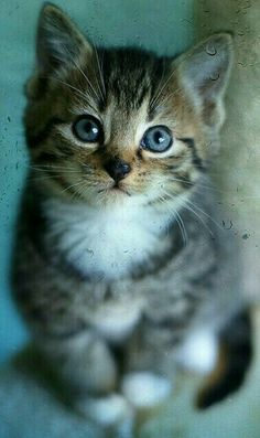 Petit Chat Roux Kitten Lover Pinterest Cat Animaux - Kitten born with dwarfism is half the cat but twice as cute