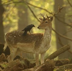 Stag and Crow