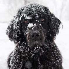 Elias Friedman (@thedogist en Instagram)  es uno de los #fotógrafos de #perritos más conocidos en #EstadosUnidos y sus fotografías nos muestran por qué. Échale un vistazo a su increíble trabajo y descubre más sobre él: https://www.buzzfeed.com/hannahloewentheil/este-chico-se-gana-la-vida-haciendo-fotos-de-perros?bfsource=bbf_es&utm_term=.cv5vekQ278#.xt76o9enaM #perros #perrito #perrosdeinstagram #instadog #Doglover #amoranimal #Dogstagram #photo #portrait