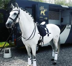 Anna took Tilly out for a brief dressage clinic with one of her instructors they… - Best Equitation Horse Cute Horses, Pretty Horses, Horse Love, Horse Photos, Horse Pictures, Dressage Horses, Horse Tack, Horse Stalls, Dressage Videos