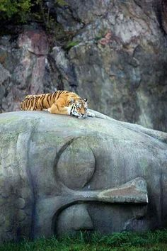 The tiger resting on God.....https://www.eukhost.com/amazing-website/