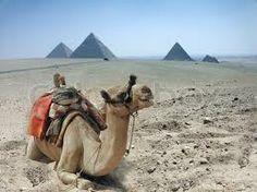 desert caravan - loaded camels - nomads - silk route
