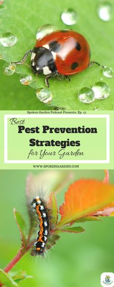 Got garden pests? Do you wonder why they keep attacking the same plant or flower? Want to know how to prevent them from coming at all? Monitoring garden pests should be high on your garden priority list and we will teach you to take back control of your yard using the 5 different methods of pest management: physical/mechanical, cultural, environmental, biological, and chemical. Listen to our podcast ep.17 to learn how to prevent and also control those pesky pests in your garden.