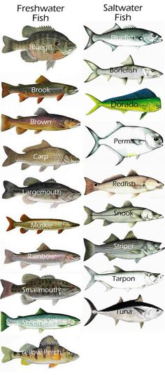 Really great bass fishing techniques. Really great bass fishing techniques. Bass Fishing Tips, Fishing Knots, Gone Fishing, Best Fishing, Trout Fishing, Kayak Fishing, Fishing Reels, Fishing Charters, Fishing Guide