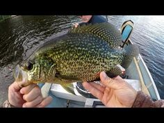 How To Catch Summer Crappies On Tube Jigs - YouTube