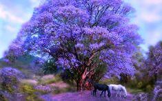 árbol de jacaranda. wallpaper