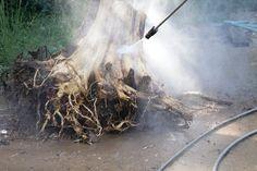 Pressure washing the stump.