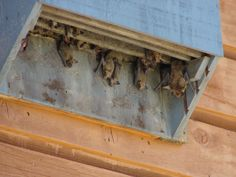 Bird House Plans 480055641531407351 - DIY Build Bat box's to naturally protect against Zika or West Nile virus Source by jefdel Build A Bat House, Bat House Plans, Bird House Kits, House Building, Bat Box Plans, How To Attract Bats, Garden Projects, Wood Projects, Carpenter Bee Trap