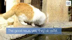 Tuna Bites Homemade Cat Treat Recipe for Sensitive Stomach - CatVills Tuna Cat Treat Recipe, Flat Faced Cat, Cat Diet, Sad Cat, Cat With Blue Eyes, Exotic Shorthair, Cat Trees, Cat Signs, Orange Cats