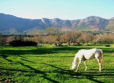 In The Heart, Cape Town, South Africa, Cottage, Horses, Beach, Google, Animals, Image