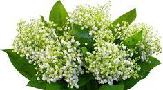 Kwiaty, Konwalie, Bukiet