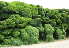 cloud hedge, Audley End house