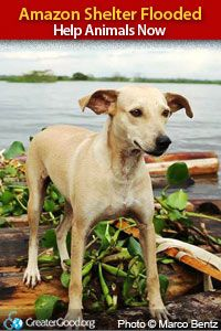 Amazon Shelter Flooded - Help Animals Now at The Animal Rescue Site