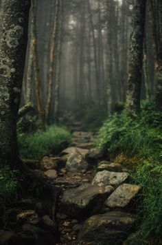 "sarahblairwilson: "" Beaver Brook Trail Mt. Moosilauke, NH """