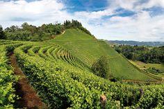 Piedmont wine region: Langhe-Roero and Montferrat