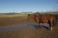 Managing Mud on Horse Farms - TheHorse.com | Mud prevention requires long-range planning and a balance between managing horses and managing pastures. #horses #pastures #mud