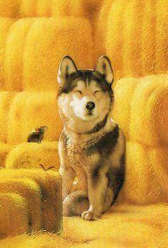Muramatsu Dog 62 | by kyoto348