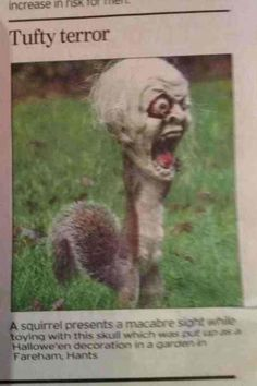 Happy Halloween, from the most unintentionally morbid squirrel in all the land.  [Via ponycamp]