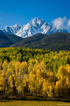 san juan valley in the fall | Snow-capped Mount Sneffels rises behind a grove of changing aspen ...
