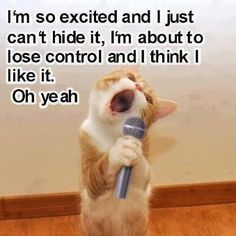 This cat is funny as it sings: I'm so excited and I just can't hide it. I'm about to lose control, and I think I like it. Oh yeah! #funny #cat