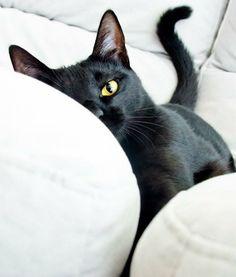 meow More