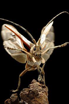 Grasshopper take-off