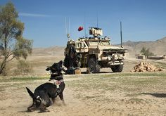 Combat Fetch by United States Marine Corps Official Page, via Flickr